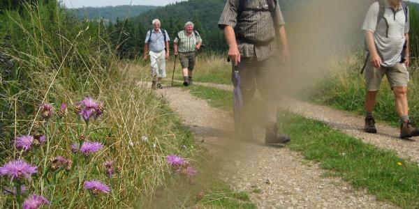 Partnerweg des Eifelsteiges: Eifeler Quellenpfad