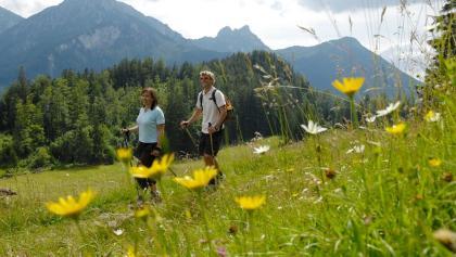 Blumenwiesen am Zirmgrat kurz vor der Saloberalm.