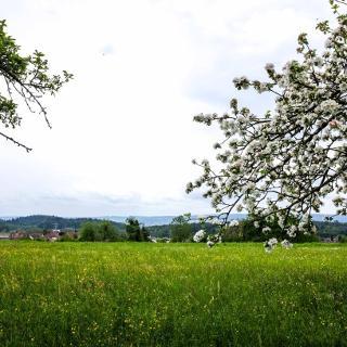 Blick Richtung Allensbach (Bodensee)