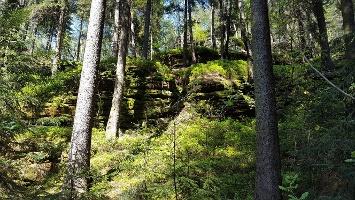 Foto Der Kleinhennersdorfer Stein ist von uriger Vegetation geprägt