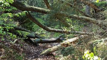 Foto Man muss genau hinschauen, um den Pfad auf dem Kleinhennersdorfer Stein zu entdecken