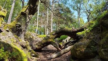 Foto Der Pfad mit Hindernissen auf dem Kleinhennersdorfer Stein