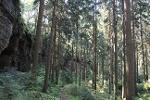Foto Der Abstiegspfad vom Kleinhennersdorfer Stein