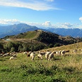 Das von Wiesen überzogene Gipfelplateau des Mottarone bietet ein phantastisches Panorama.