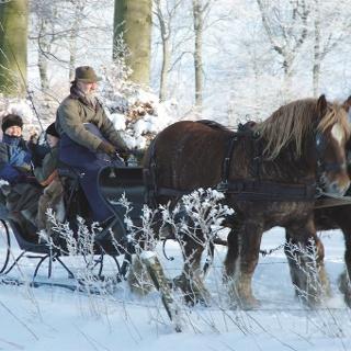 Pferdeschlittenfahrten