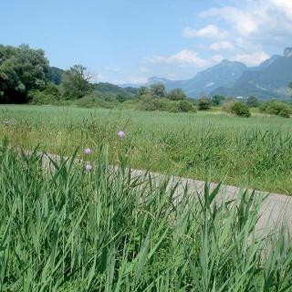 Koblacher Riedwiesen mit Blick zum Kapf