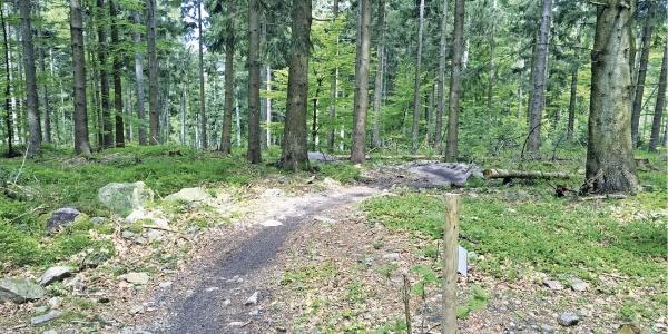 Einstieg ins Trailcenter Sasbachwalden