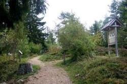 Dachsberg: Baumlehrpfad bei der Dachsberg-Halle