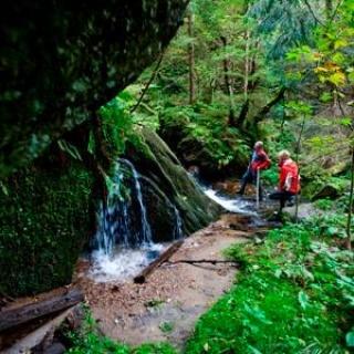 Wild Wandern Feistritzbach