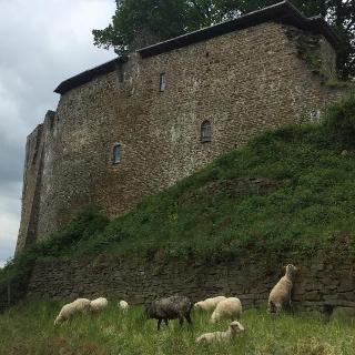 Burg Blankenberg