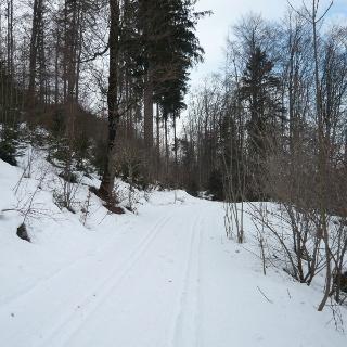 Am Waldrand beim Emerlander Weiher in der Eschachtalloipe (1)