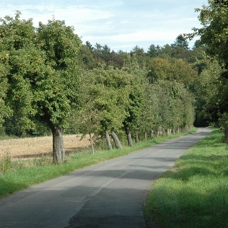 Waldstraße Richtung Steinheimer Holz
