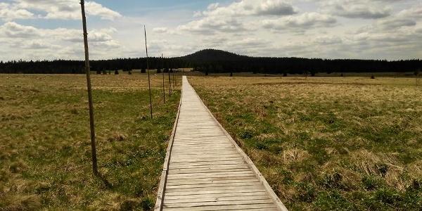 Božídarské rašeliniště s vrcholem Špičáku (1115 mnm)