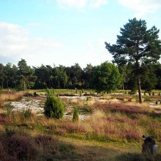Hügelgräber in einer idyllischen Heidelandschaft im Wacholderhain