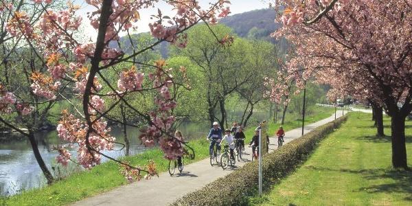 Sauer-Radweg_Radfahrer entlang der Sauer