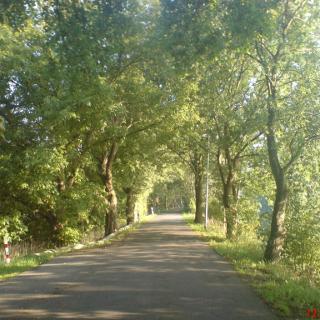 Der wunderschöne Radweg am westlichen Spreeufer