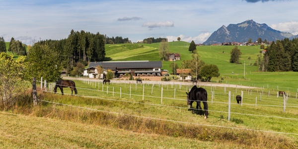Reitstall in Muderbolz