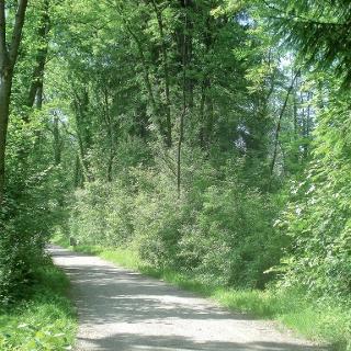 Achweg Kennelbach-Weidach