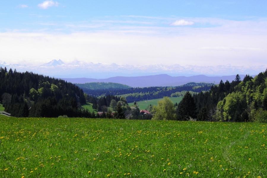 Herrischried: Wanderung von Wehrhalden zum Aussichtsturm Gugelturm