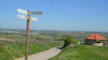 Kleiner Mainzer Höhenweg Etappe 1: Laubenheim - Ebersheim
