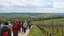Kleiner Mainzer Höhenweg Etappe 2:  Ebersheim - Forsthaus Ober-Olm