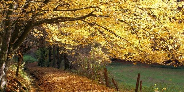 Buntes Herbstlaub am Stadtwasser