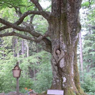 Naturdenkmal Balzer-Hergott
