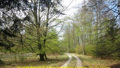 Passweg durch den Buchenhochwald