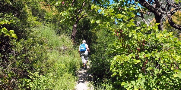 Am Wanderweg südseitig