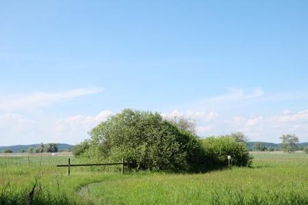 Naturschutzgebiet Espen Riet / Ermatinger Riet