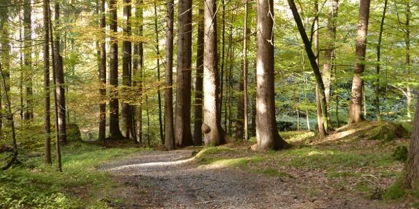 Gaueser Wald