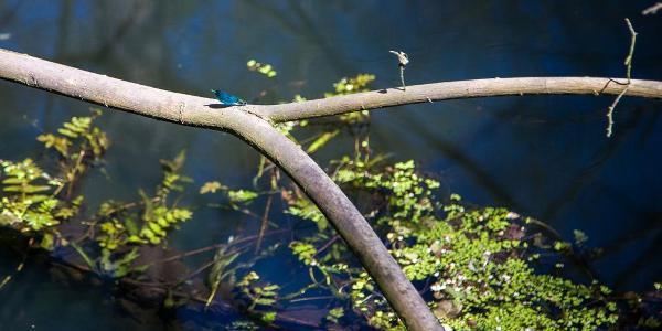 Auf der anderen Seite der Brücke tummel sich Libellen