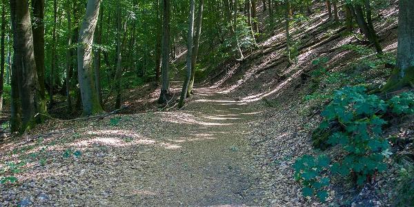 rechts Hügel und links der Tornowsee