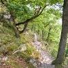 Oberhalb der Pulsbachklamm führt der Rheinsteig reizvoll durch niedrigen Eichenwald dahin.