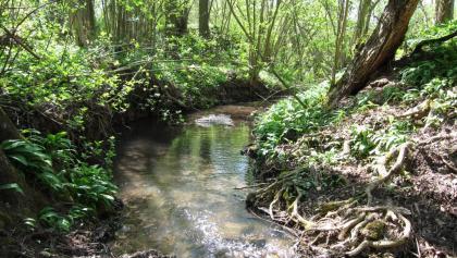 Der Steinbach fließt westlich an den Seewaldssen vorbei. Ein schmaler Pfad führt zu diesem Idyll.