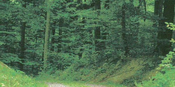 Die Alte Gurtweiler Straße