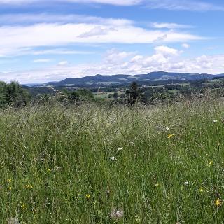 Aussicht von Koppl in den Flachgau