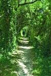 """""""Naturtunnel""""   - © Quelle: Touristikgemeinschaft Hohenlohe"""