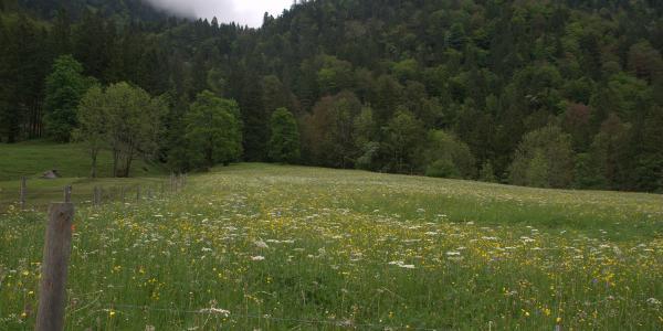Am Eingang zum Höllbach Tobel