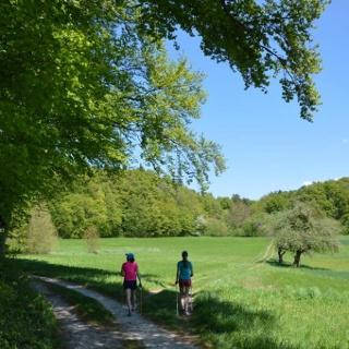 Auf der Jurahöhe zwischen Ebermannstadt und Wiesenttal