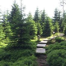 Wald Wandel Weg