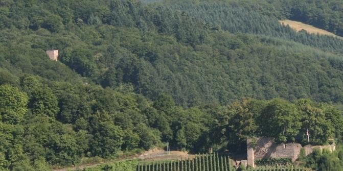 Im dichten Wald befinden sich die Ruinen von Burg Neuwolfstein und Altwolfstein.