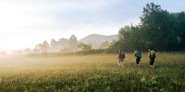 Morgennebel bei Schindhard