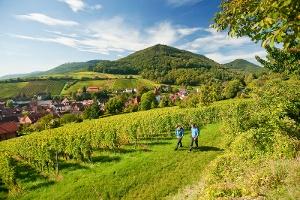 Malerischer Blick auf Leinsweiler (Foto: Domink Ketz, Quelle: Pfalz Touristik e.V.)