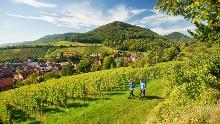 Pfälzer Weinsteig Complete Trail