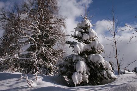 Winterlandschaft rund um Höchenschwand