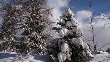 Höchenschwand: Winter hiking to the romantic Dreherhäusleweiher