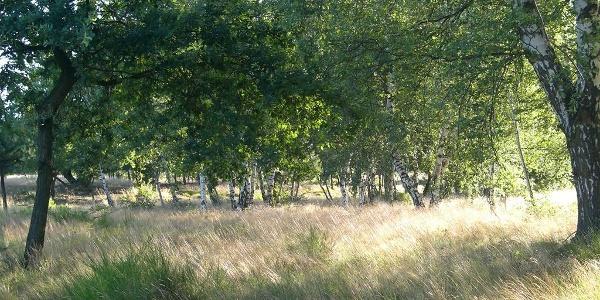 Mehlinger Heide 4