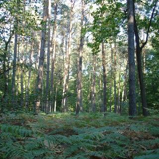 Bellheimer Wald