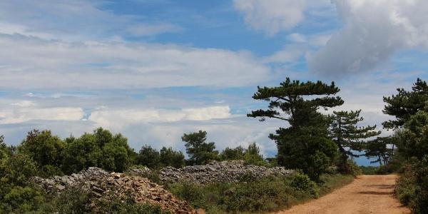 Mediterranes Buschwerk und Pinien
